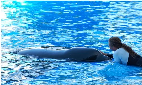 Did Dawn Brancheau Make A Mistake, Or Was SeaWorld Taking Risks With